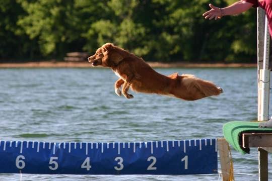 Dog Pals/ Healthy Pets USA