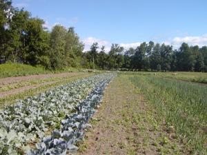Crabapple Farm